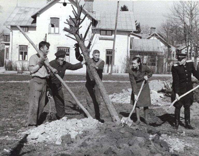 Siguldas pilsētas parka izveidošana 1951. gada maijā