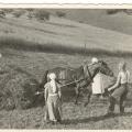 Siena talka Turaidā ap 1938. gadu, SM 13305