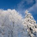 Ziemas diena Turaidā