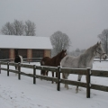Zirgi Turaidā