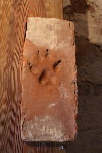 Ķieģelis ar suņa pēdas nospiedumu. Atrasts Turaidas pilī