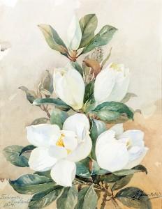Jūlijs Jaunkalniņš. Magnolijas. 1914. Papīrs, akvarelis. 62 x 48 cm. VMM Z-6420