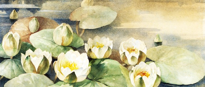 Jūlijs Jaunkalniņš. Ūdens lilijas. Balta puķe ezerā. Līdz 1910. Papīrs, akvarelis. 24,5 x 49,5 cm. VMM Z-6833