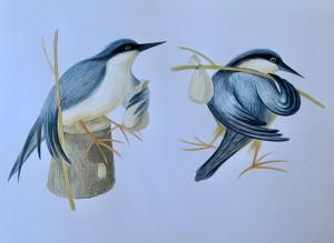 Siguldas mākslinieces Unas Leitānes zīmētais putniņš – pavadonis pastaigā pa Lībiešu taku